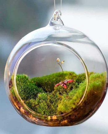 Cute Decorative Hanging Transparent Glass Vase