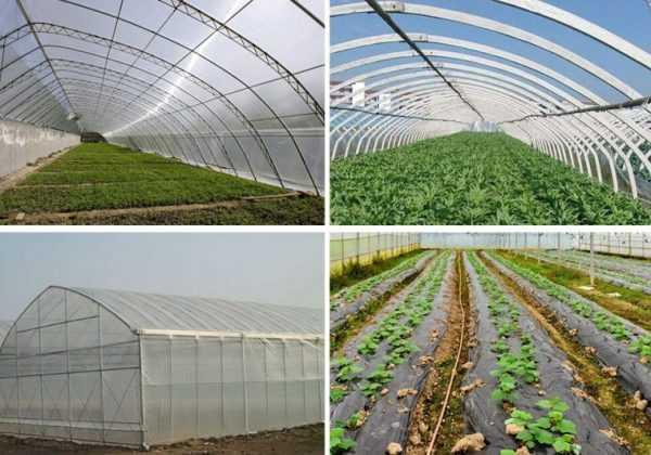 Greenhouses Repair Tape
