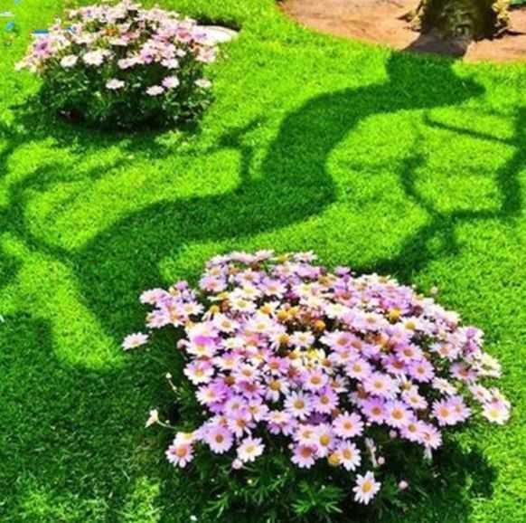 Garden Lawn Grass Seed