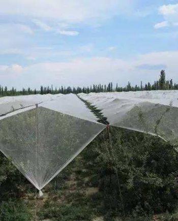Garden Mesh Netting